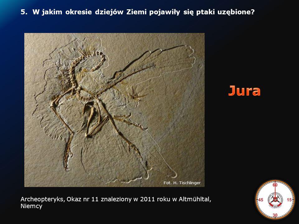 4.W jakim okresie żył pteranodon Pteranodon http://www.itsnature.org/rip/dinosaurs/pteranodon/