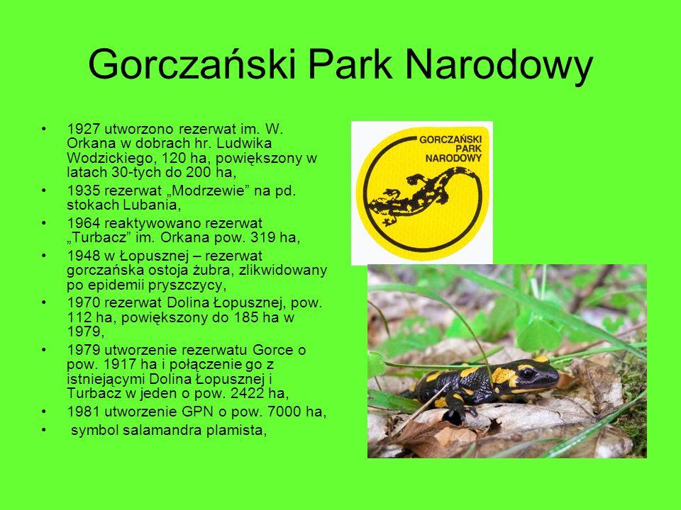 Gorczański Park Narodowy 1927 utworzono rezerwat im. W. Orkana w dobrach hr. Ludwika Wodzickiego, 120 ha, powiększony w latach 30-tych do 200 ha, 1935