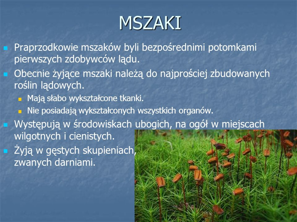 Widłaki Są to niewielkie rośliny zielne o płożących się łodygach i drobnych, łuskowatych liściach.