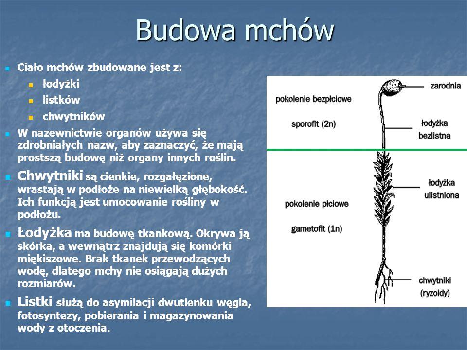 Zadania 1.Wymień 5 gatunków paprotników objętych w Polsce całkowitą ochroną gatunkową.