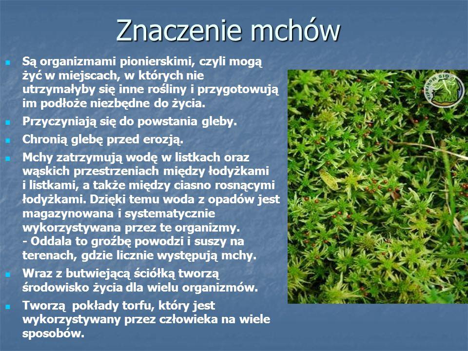 Paprotniki Paprotniki, podobnie jak mchy, są roślinami zarodnikowymi, czyli nie wytwarzają kwiatów, nasion i owoców.