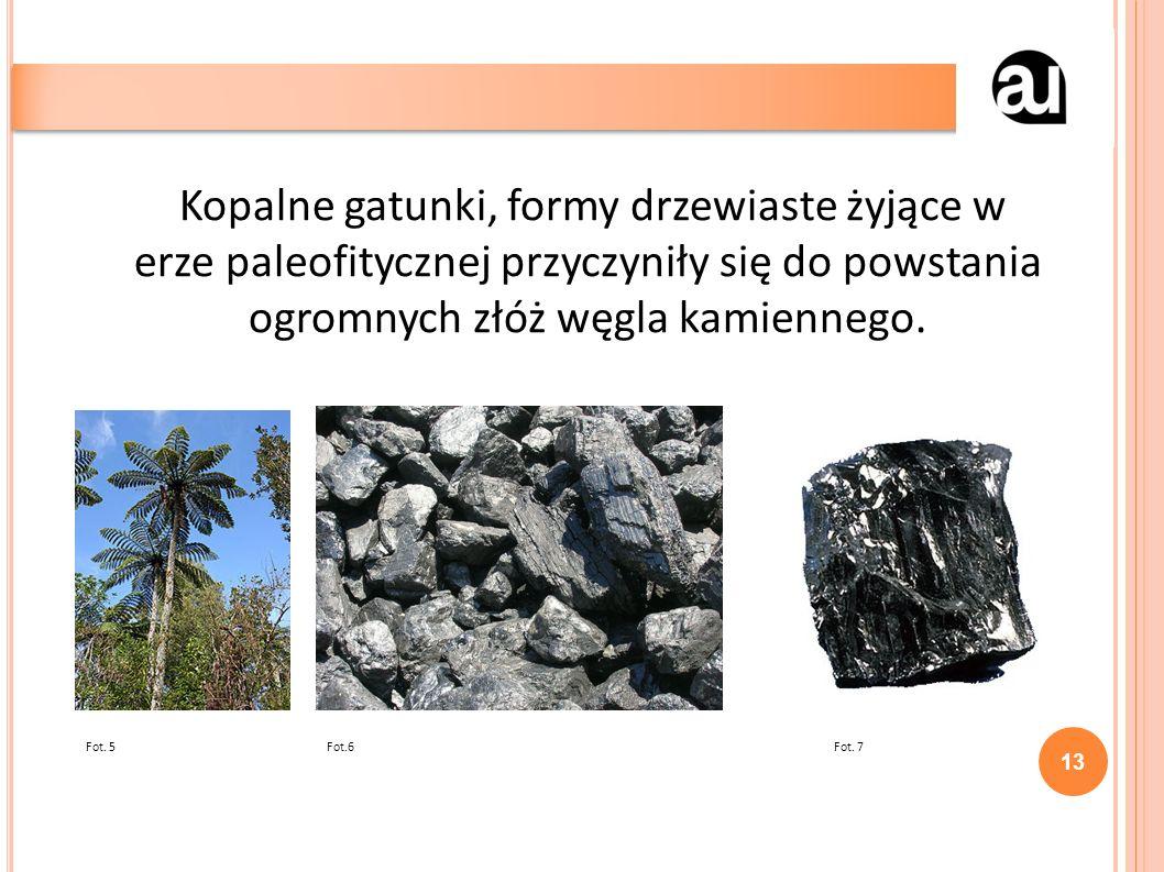 Kopalne gatunki, formy drzewiaste żyjące w erze paleofitycznej przyczyniły się do powstania ogromnych złóż węgla kamiennego.