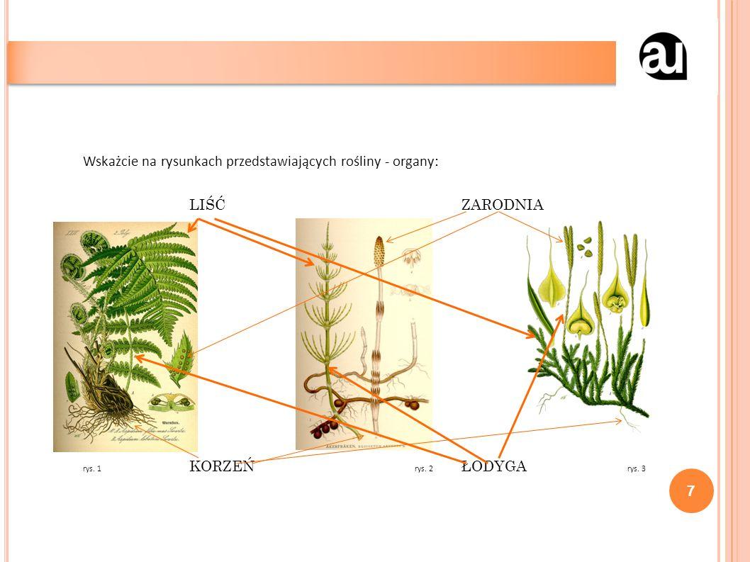 Wskażcie na rysunkach przedstawiających rośliny - organy: LIŚĆZARODNIA rys.
