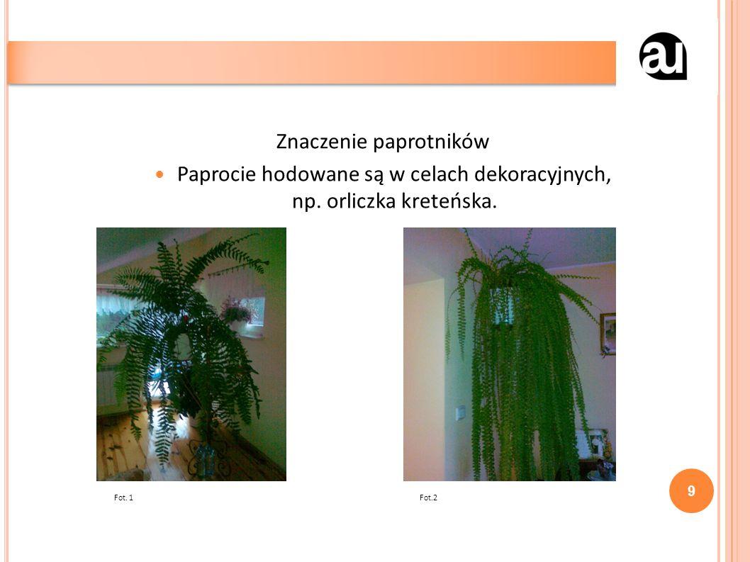 Znaczenie paprotników Paprocie hodowane są w celach dekoracyjnych, np.