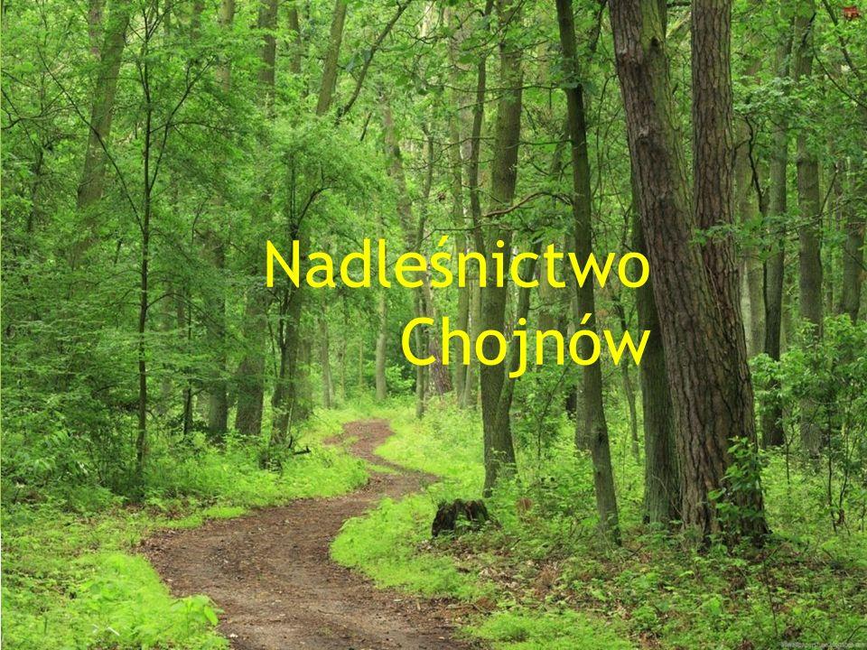  Nadleśnictwo Chojnów położone jest na obszarze przylegającym do Warszawy od południa i zachodu.