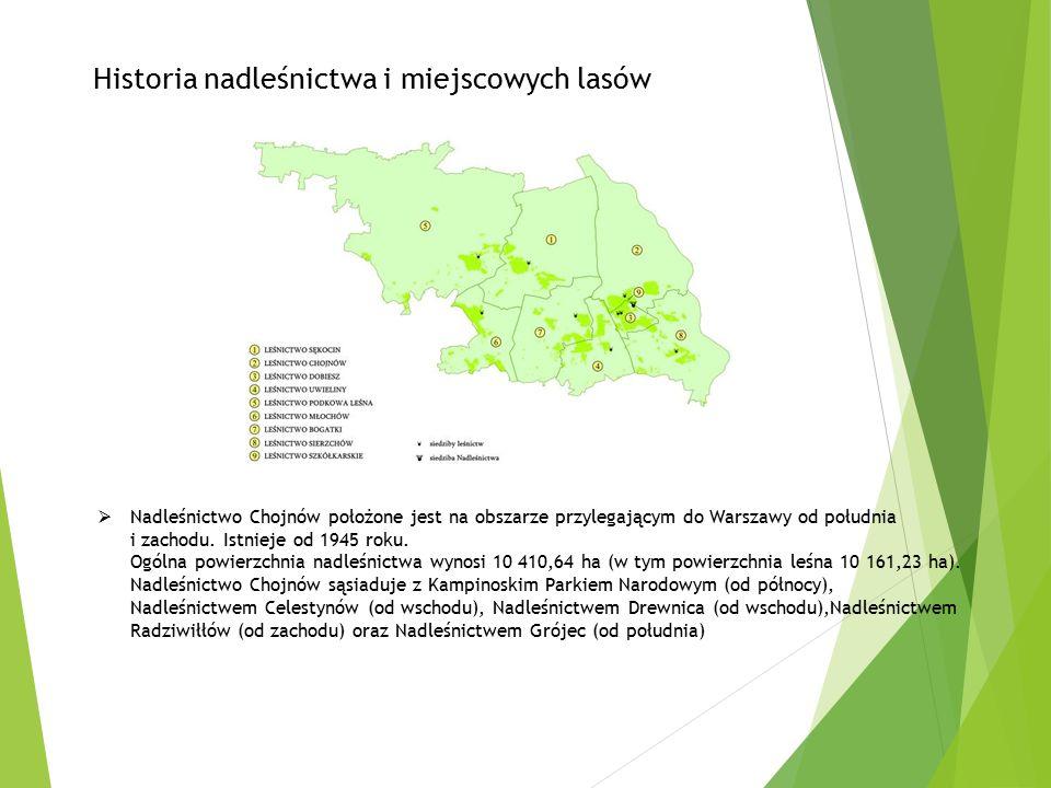  Nadleśnictwo Chojnów położone jest na obszarze przylegającym do Warszawy od południa i zachodu. Istnieje od 1945 roku. Ogólna powierzchnia nadleśnic