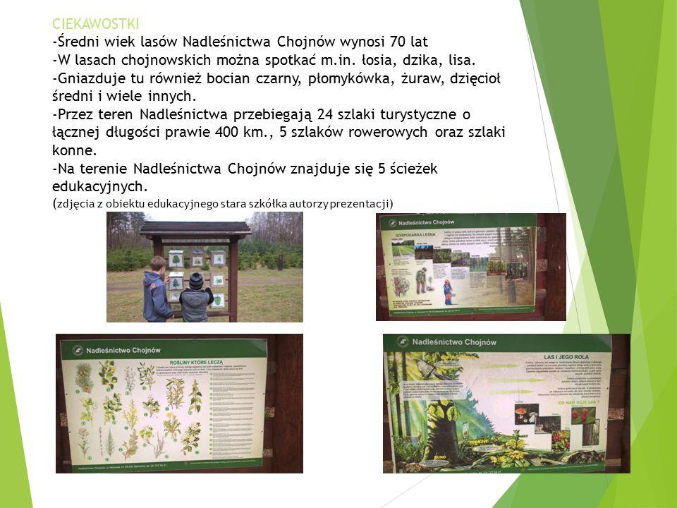 CIEKAWOSTKI -Średni wiek lasów Nadleśnictwa Chojnów wynosi 70 lat -W lasach chojnowskich można spotkać m.in.