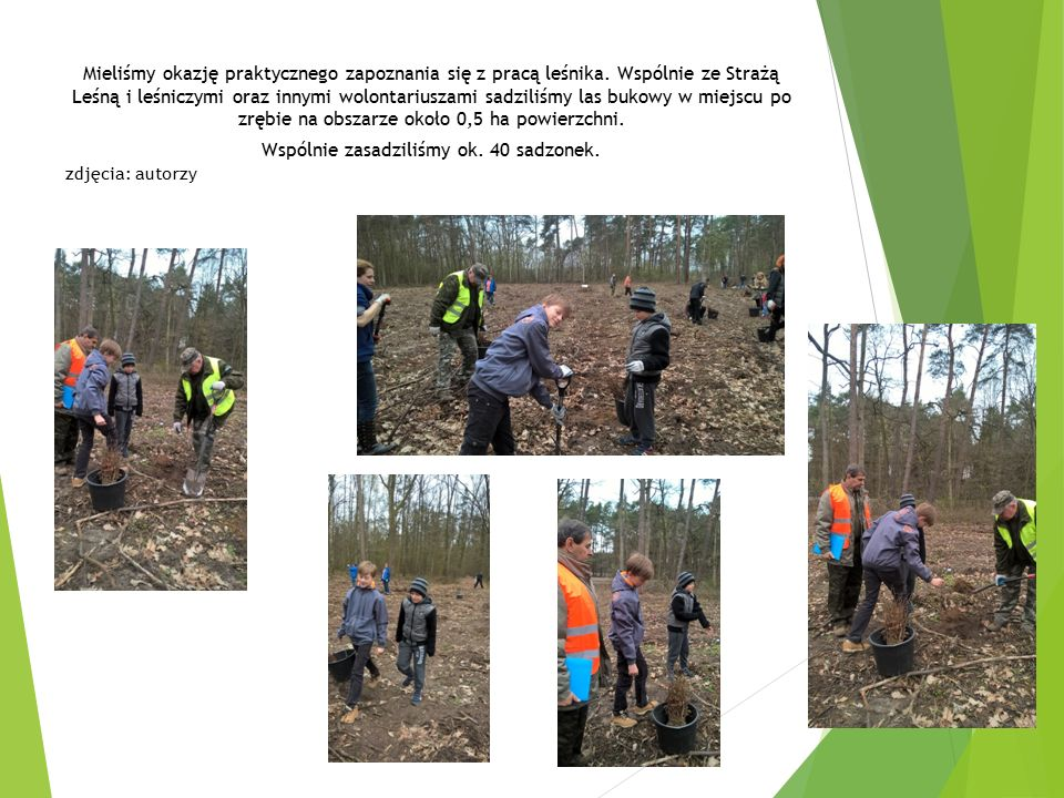 Mieliśmy okazję praktycznego zapoznania się z pracą leśnika. Wspólnie ze Strażą Leśną i leśniczymi oraz innymi wolontariuszami sadziliśmy las bukowy w
