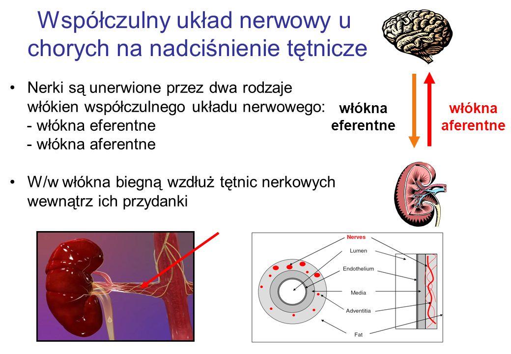 Współczulny układ nerwowy u chorych na nadciśnienie tętnicze Nerki są unerwione przez dwa rodzaje włókien współczulnego układu nerwowego: - włókna eferentne - włókna aferentne W/w włókna biegną wzdłuż tętnic nerkowych wewnątrz ich przydanki włókna aferentne włókna eferentne