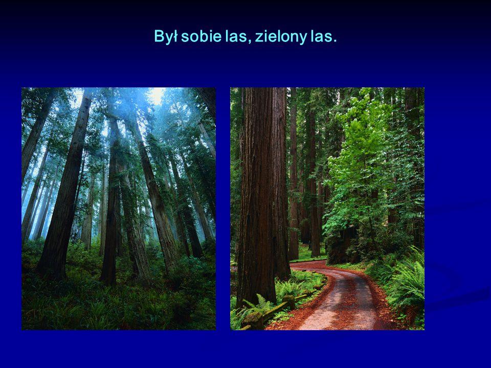 Był sobie las, zielony las.