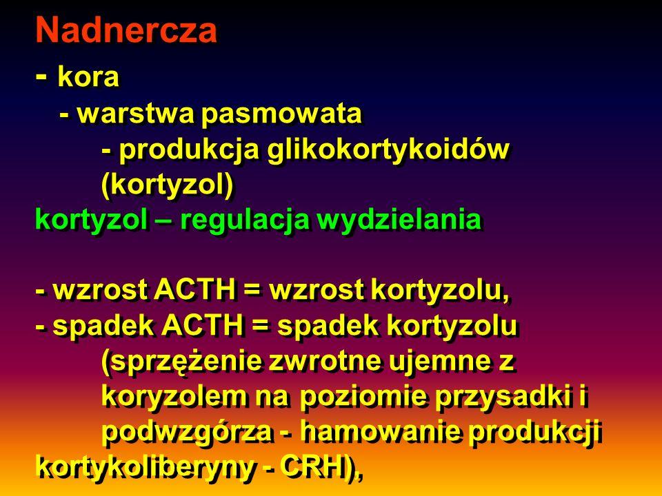 Nadnercza - kora - warstwa pasmowata - produkcja glikokortykoidów (kortyzol) kortyzol – regulacja wydzielania - wzrost ACTH = wzrost kortyzolu, - spad