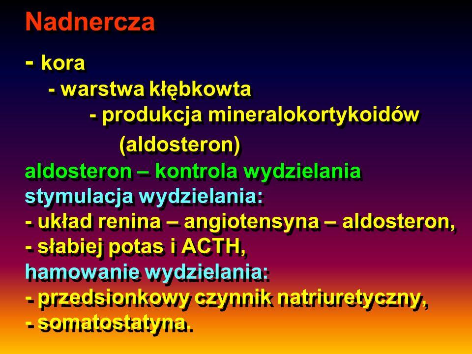 Nadnercza - kora - warstwa kłębkowta - produkcja mineralokortykoidów (aldosteron) aldosteron – kontrola wydzielania stymulacja wydzielania: - układ re