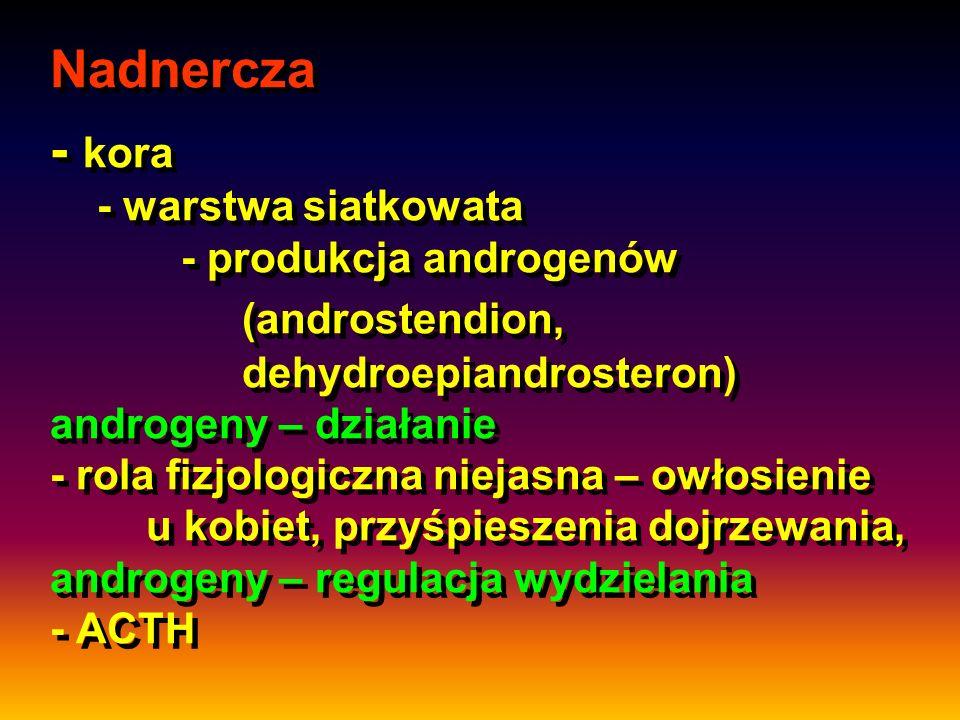 Nadnercza - kora - warstwa siatkowata - produkcja androgenów (androstendion, dehydroepiandrosteron) androgeny – działanie - rola fizjologiczna niejasn