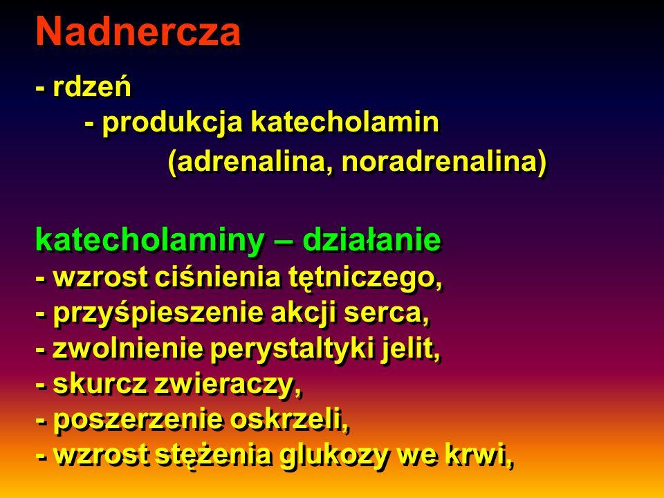 Nadnercza - rdzeń - produkcja katecholamin (adrenalina, noradrenalina) katecholaminy – działanie - wzrost ciśnienia tętniczego, - przyśpieszenie akcji