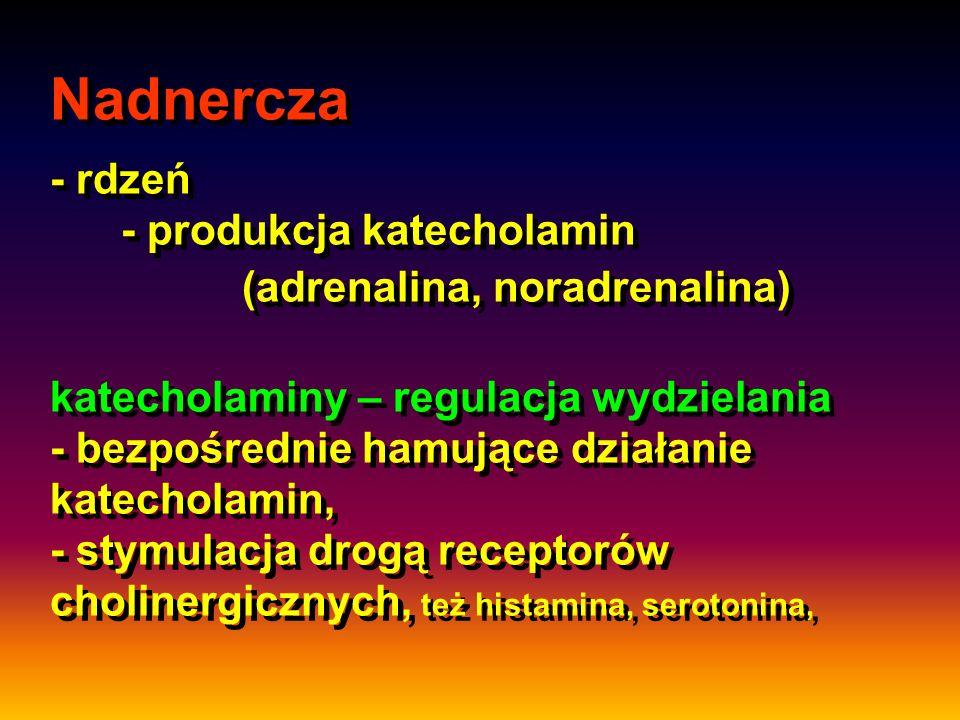 Nadnercza - rdzeń - produkcja katecholamin (adrenalina, noradrenalina) katecholaminy – regulacja wydzielania - bezpośrednie hamujące działanie katecho