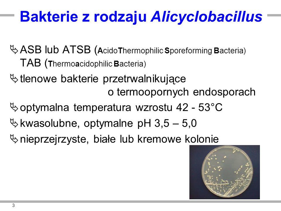 3 Bakterie z rodzaju Alicyclobacillus  ASB lub ATSB ( AcidoThermophilic Sporeforming Bacteria) TAB ( Thermoacidophilic Bacteria)  tlenowe bakterie p