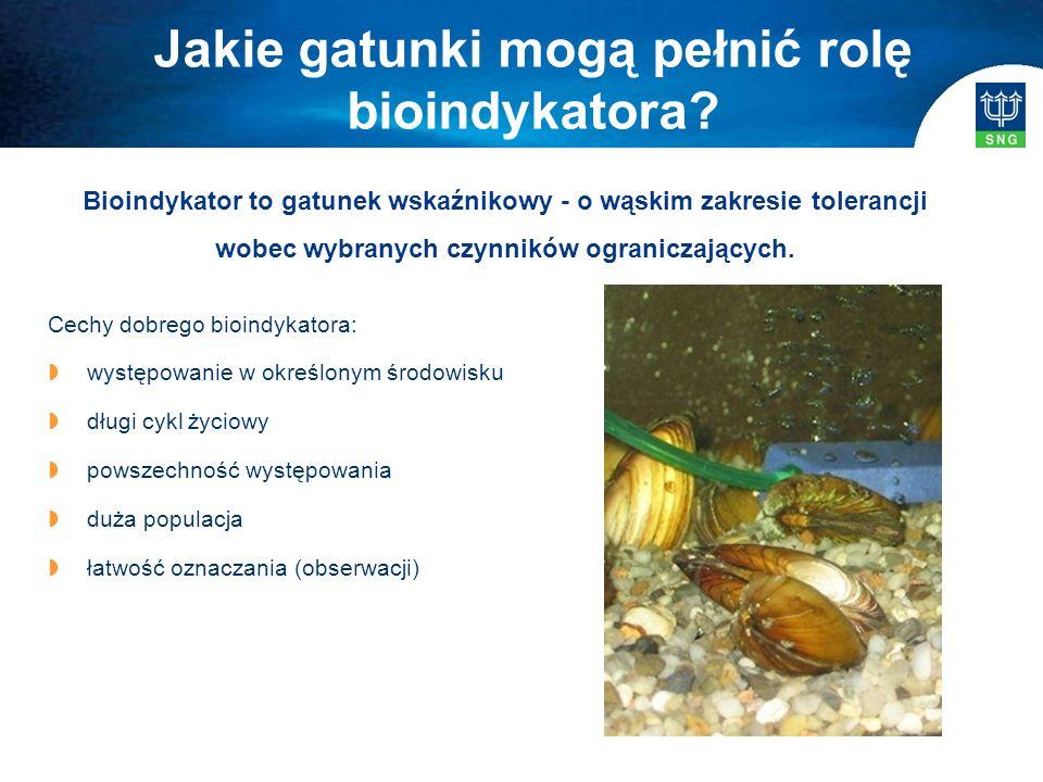 Bioindykator to gatunek wskaźnikowy - o wąskim zakresie tolerancji wobec wybranych czynników ograniczających. Cechy dobrego bioindykatora:  występowa