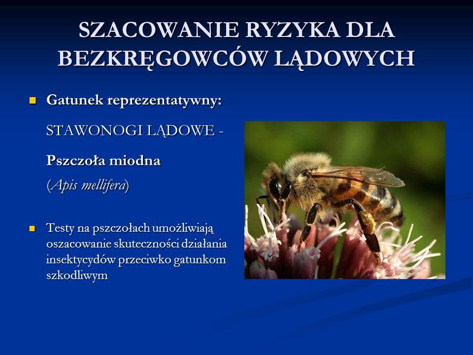 SZACOWANIE RYZYKA DLA BEZKRĘGOWCÓW LĄDOWYCH Gatunek reprezentatywny: Gatunek reprezentatywny: STAWONOGI LĄDOWE - Pszczoła miodna Pszczoła miodna (Apis