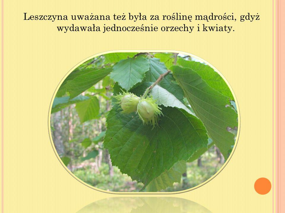 Pośród polskich drzew i krzewów wiele jest takich, które wyróżniają się wielkością, kształtem, barwą kory lub liści.