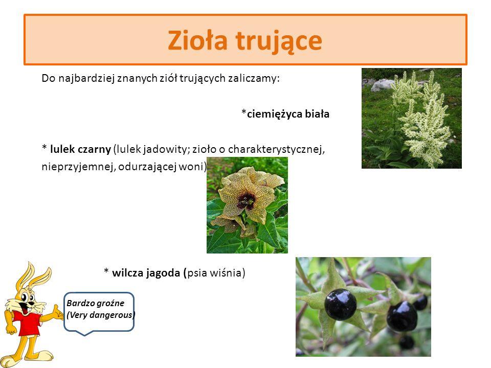 Zioła trujące Nie wszystkie zioła wykazują korzystne czy lecznicze działanie.