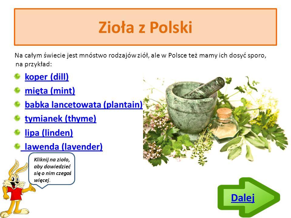 Co to są zioła.Zioła to inaczej przyprawy. Używamy ich, aby polepszyć smak potraw.