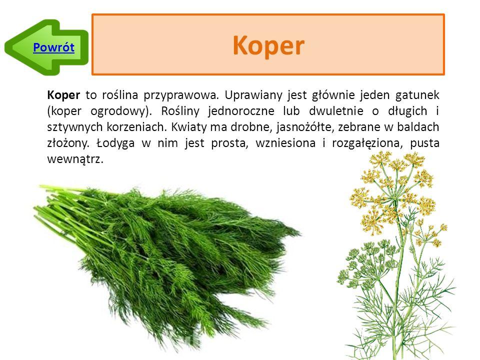 Koper Koper to roślina przyprawowa.Uprawiany jest głównie jeden gatunek (koper ogrodowy).