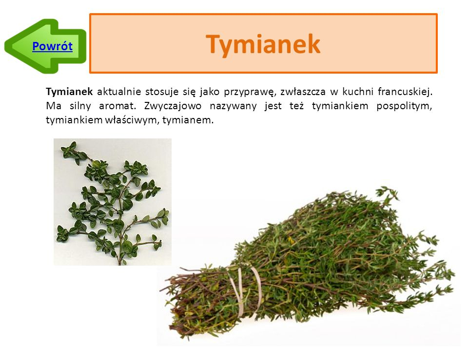 Tymianek Tymianek aktualnie stosuje się jako przyprawę, zwłaszcza w kuchni francuskiej.