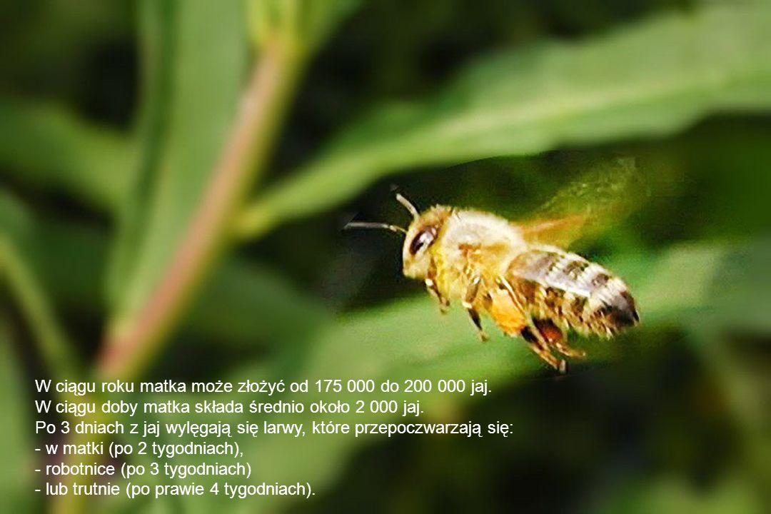 W pszczelarstwie pasieka to teren z ustawionymi ulami.