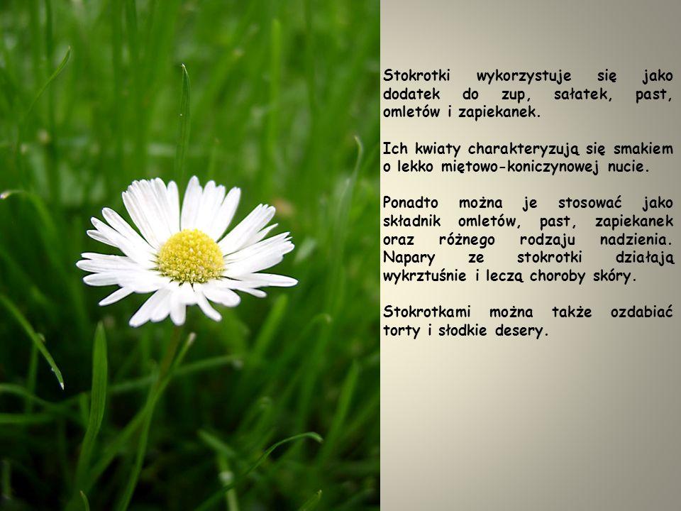 STOKROTKA POSPOLITA (Bellis prennis) Kwiaty stokrotek pospolitych są idealnym dodatkiem do sałatek.