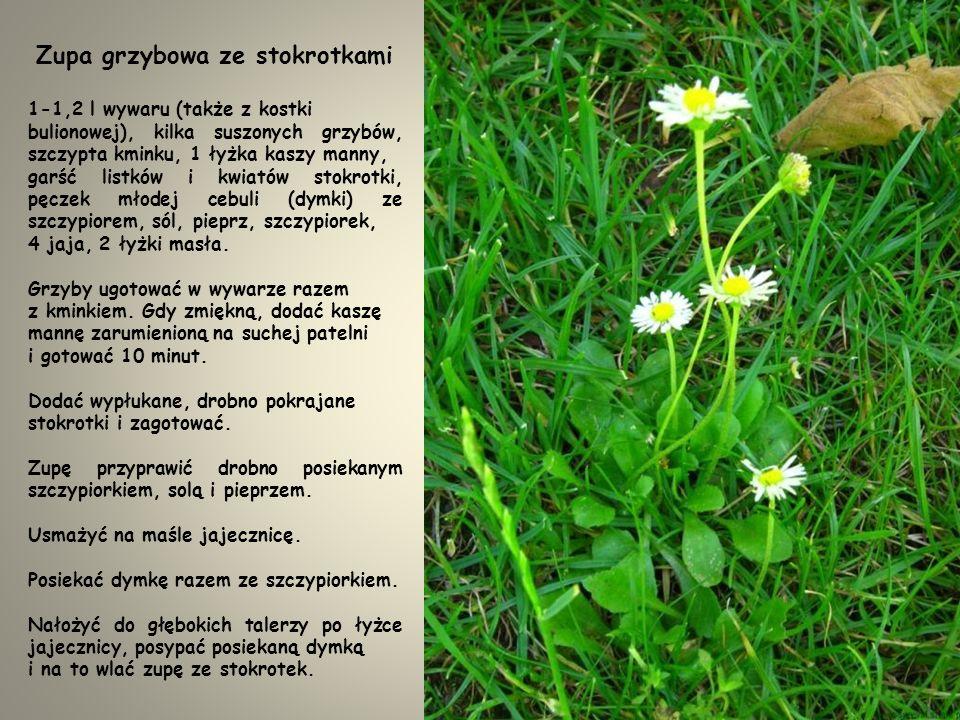 SYROP STOKROTKOWY 250 g kwiatów stokrotki, pół cytryny, 40 g cukru, 3-4 szklanki wody.