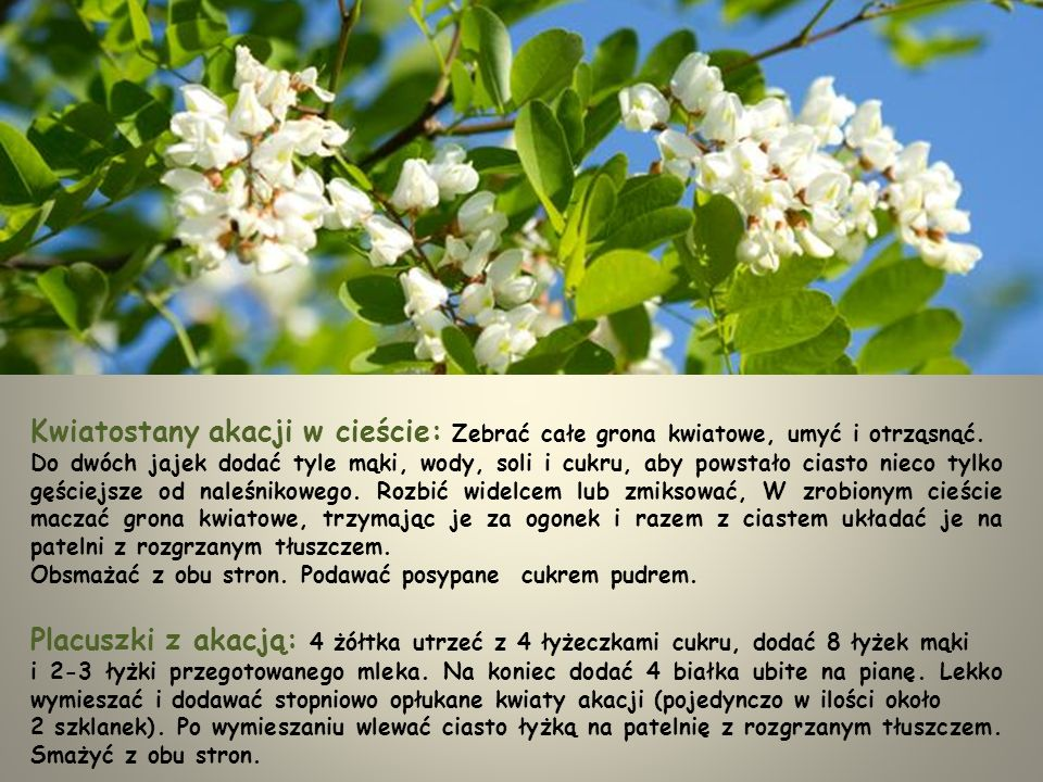 Kwiatostany akacji w cieście: Zebrać całe grona kwiatowe, umyć i otrząsnąć.
