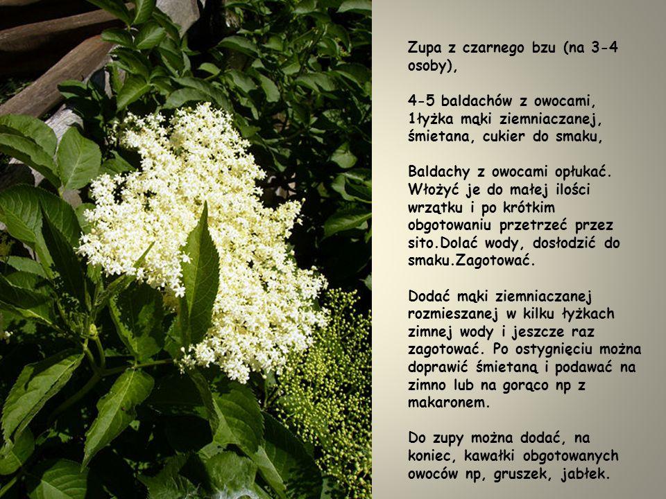 Kwiatostan bzu czarnego można przyrządzić podobnie do kwiatostanu akacji.