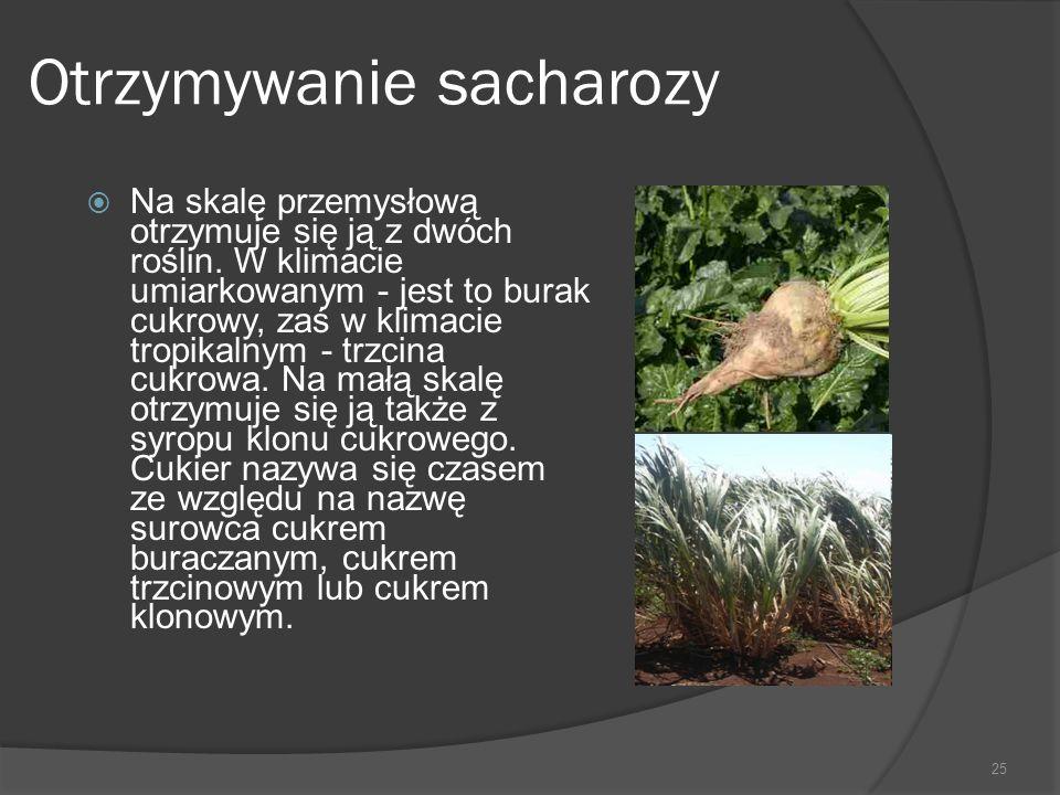 Otrzymywanie sacharozy  Na skalę przemysłową otrzymuje się ją z dwóch roślin. W klimacie umiarkowanym - jest to burak cukrowy, zaś w klimacie tropika