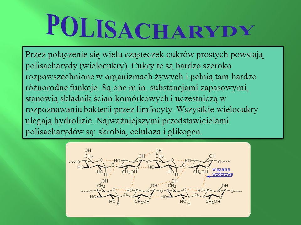 Przez połączenie się wielu cząsteczek cukrów prostych powstają polisacharydy (wielocukry).