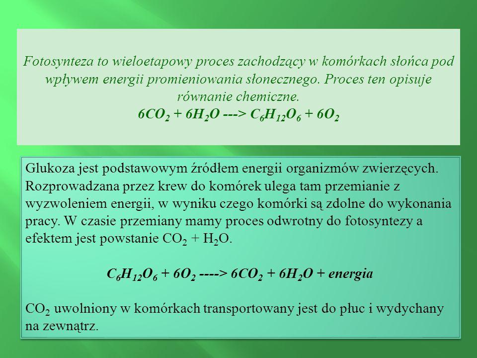 Fotosynteza to wieloetapowy proces zachodzący w komórkach słońca pod wpływem energii promieniowania słonecznego.