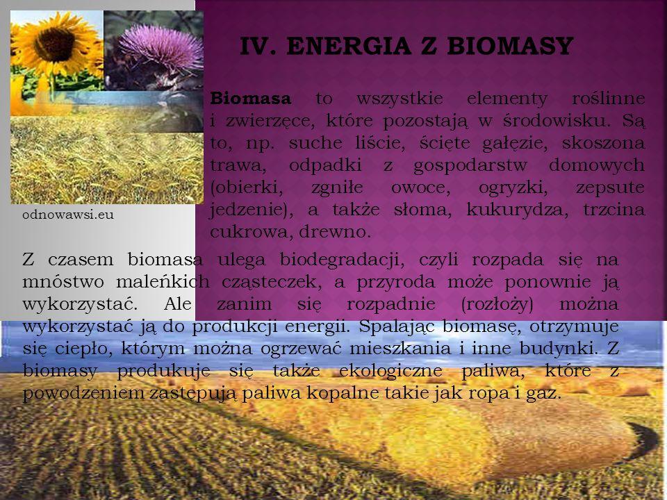 IV. ENERGIA Z BIOMASY Biomasa to wszystkie elementy roślinne i zwierzęce, które pozostają w środowisku. Są to, np. suche liście, ścięte gałęzie, skosz