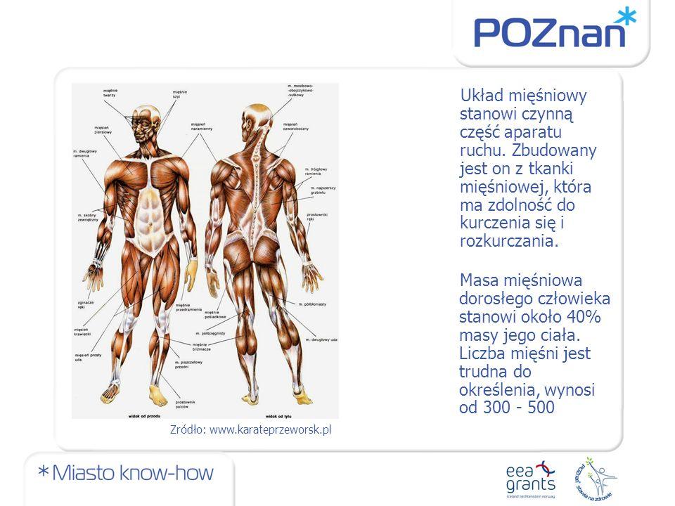 Układ mięśniowy stanowi czynną część aparatu ruchu.