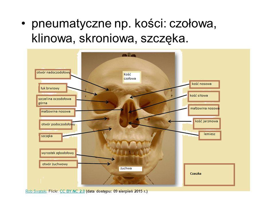 pneumatyczne np. kości: czołowa, klinowa, skroniowa, szczęka.