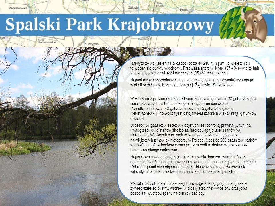 Na terenie Nadleśnictwa Spała występuje Spalski Park Krajobrazowy.