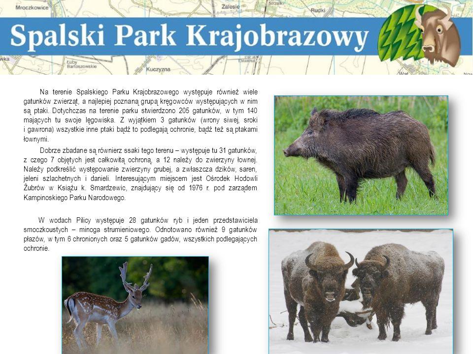 Na tle równinnego, mało lesistego krajobrazu Polski Środkowej dolina rzeki Pilicy wyróżnia się malowniczością i różnorodnością krajobrazu.