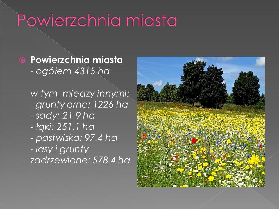  Powierzchnia miasta - ogółem 4315 ha w tym, między innymi: - grunty orne: 1226 ha - sady: 21.9 ha - łąki: 251.1 ha - pastwiska: 97.4 ha - lasy i grunty zadrzewione: 578.4 ha