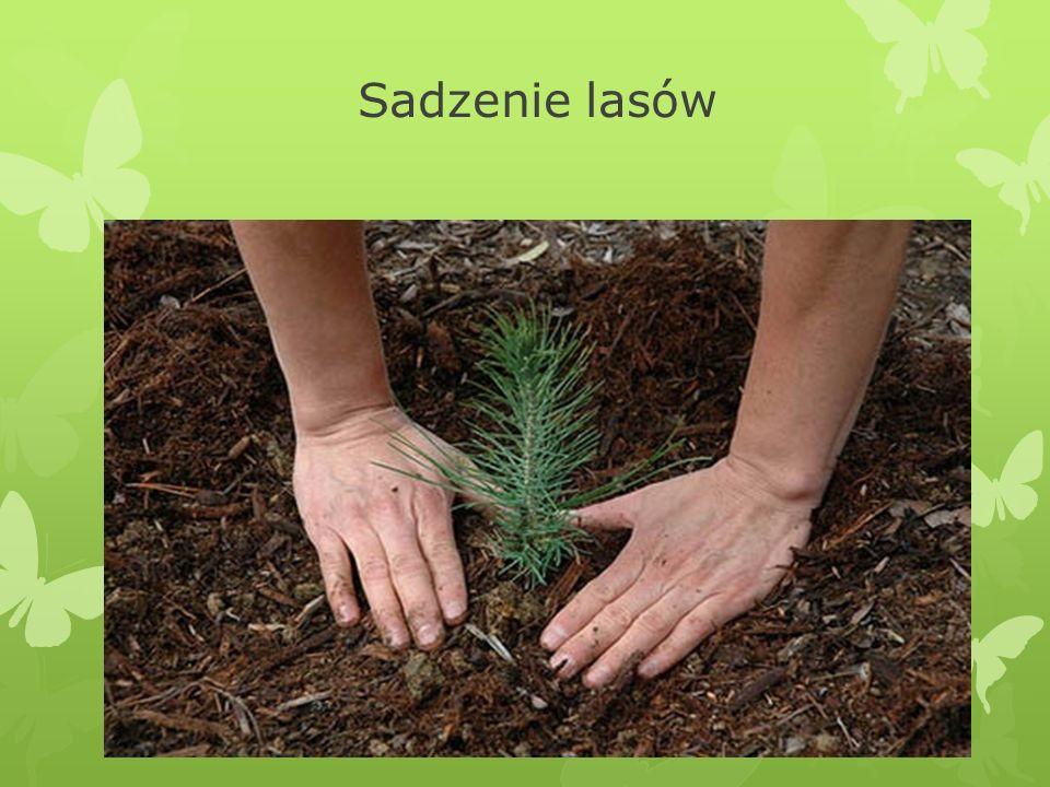 Sadzenie lasów