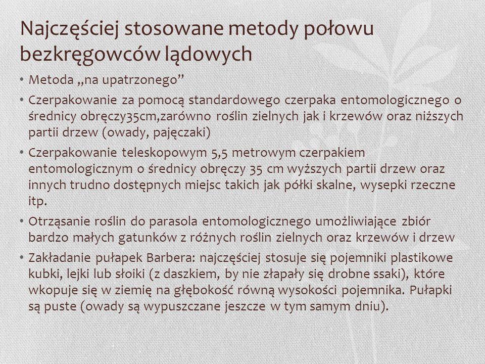 """Najczęściej stosowane metody połowu bezkręgowców lądowych Metoda """"na upatrzonego"""" Czerpakowanie za pomocą standardowego czerpaka entomologicznego o śr"""