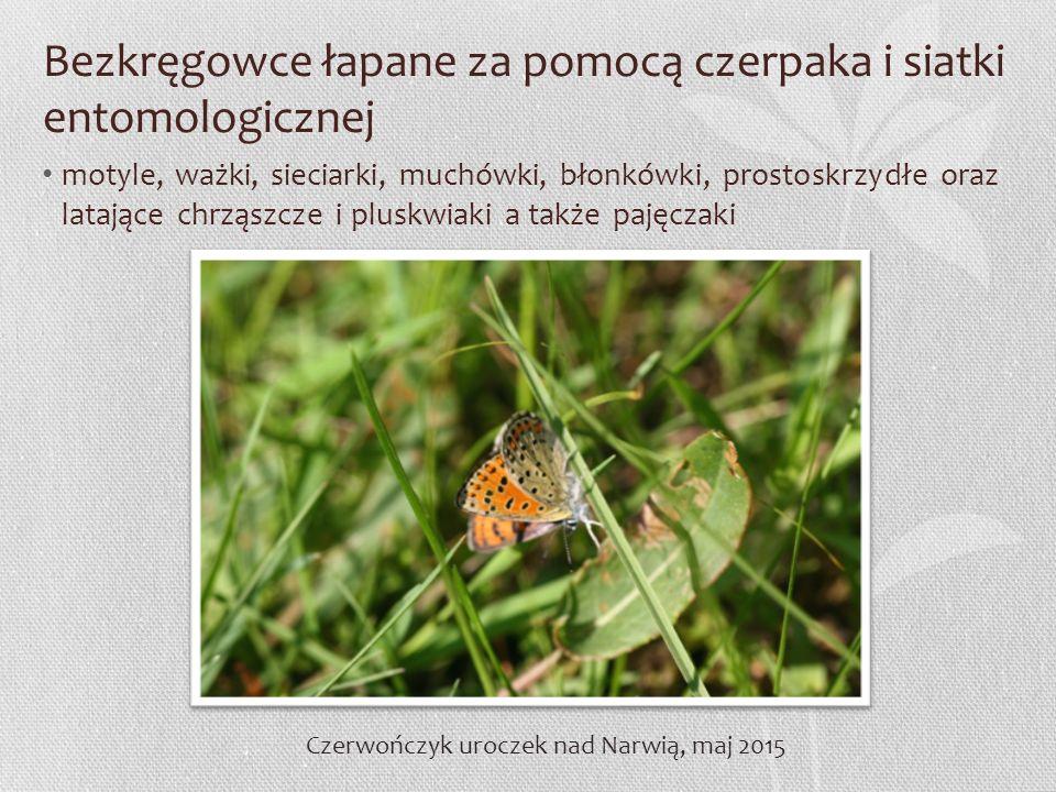 Bezkręgowce łapane za pomocą czerpaka i siatki entomologicznej motyle, ważki, sieciarki, muchówki, błonkówki, prostoskrzydłe oraz latające chrząszcze