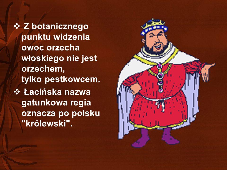 """ Jagienka z """"Krzyżaków Henryka Sienkiewicza, mogła tłuc orzechy tą częścią ciała, gdzie plecy kończą swą szlachetna nazwę."""