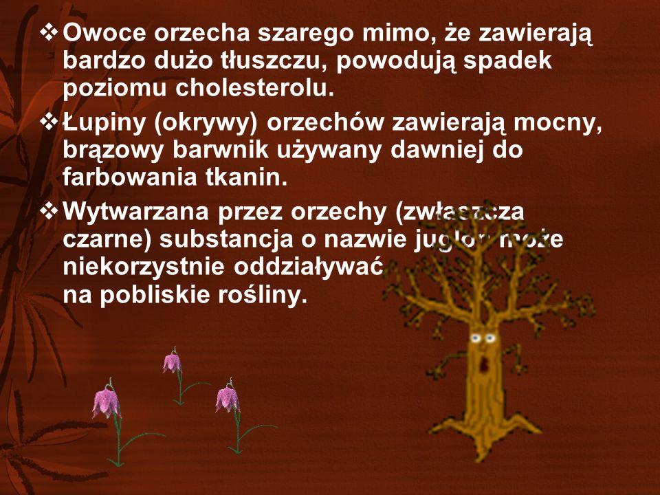 Z botanicznego punktu widzenia owoc orzecha włoskiego nie jest orzechem, tylko pestkowcem.  Łacińska nazwa gatunkowa regia oznacza po polsku