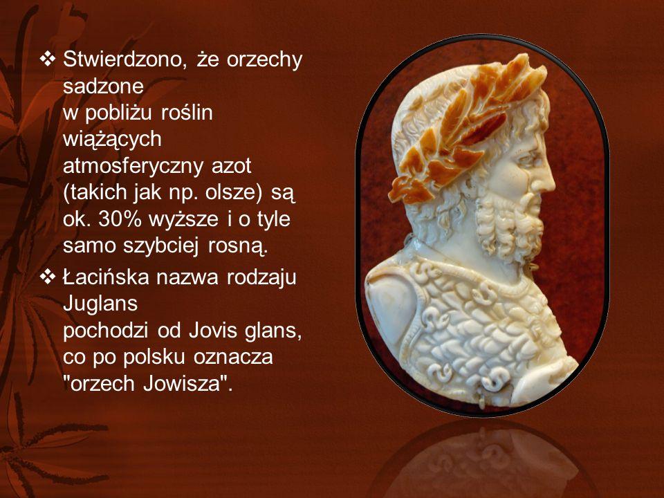  W Starożytnym Rzymie określenie orzechy oznaczało...