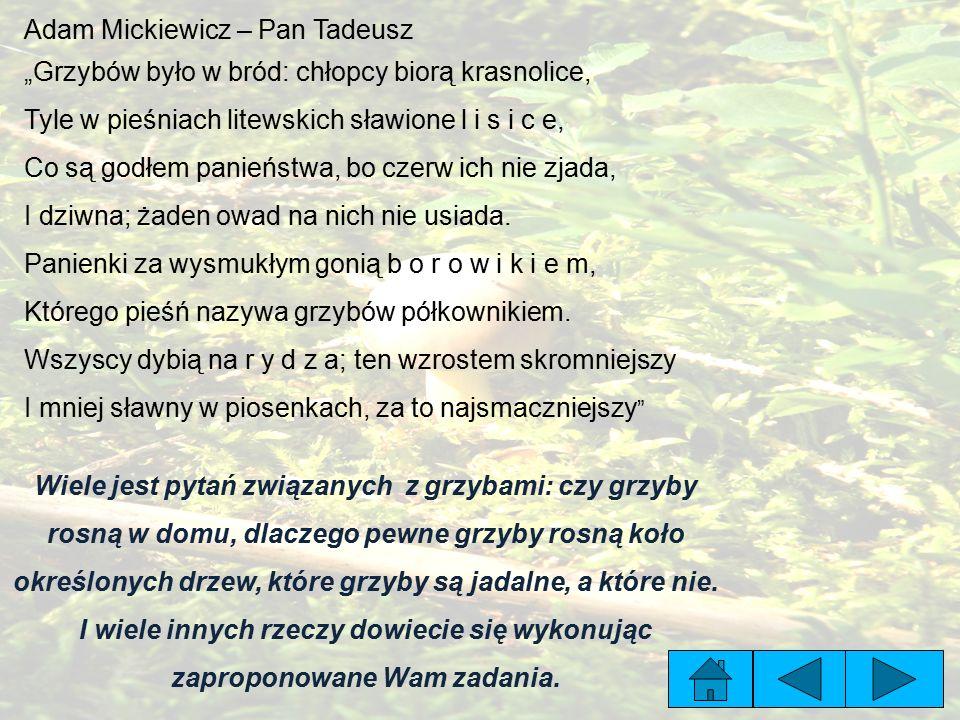 """Adam Mickiewicz – Pan Tadeusz """"Grzybów było w bród: chłopcy biorą krasnolice, Tyle w pieśniach litewskich sławione l i s i c e, Co są godłem panieństwa, bo czerw ich nie zjada, I dziwna; żaden owad na nich nie usiada."""