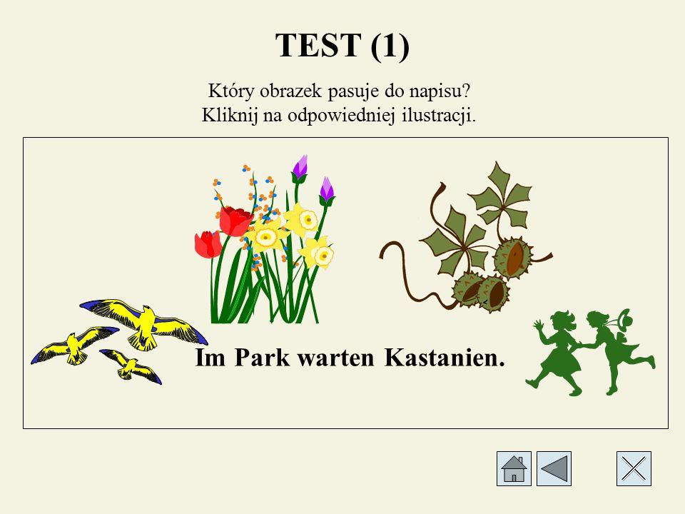 Który obrazek pasuje do napisu? Kliknij na odpowiedniej ilustracji. Der Wind weht. TEST (1)