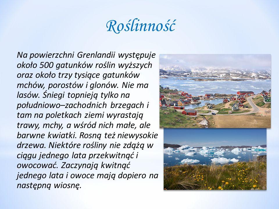 Roślinność Na powierzchni Grenlandii występuje około 500 gatunków roślin wyższych oraz około trzy tysiące gatunków mchów, porostów i glonów.